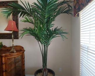 Very Tall Silk Tree
