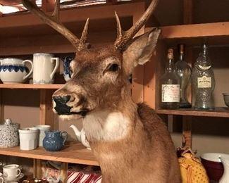 Deer head taxidermy wall mount.