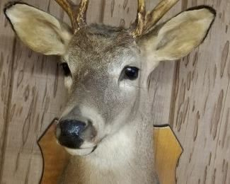 9 point Florida deer. Great deco