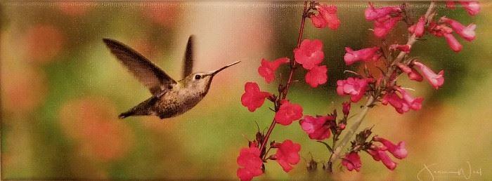 Hummingbird art.