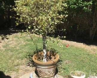 Outdoor pot with tree
