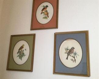 Set of Bird Pictures