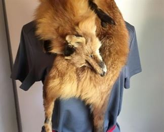 2801 Red Fox Stollmin