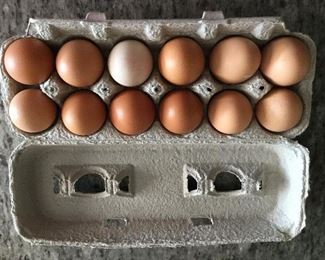 fresh cage free organic fed country eggs.