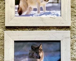 Wolf photos by nature photographer William H. Wiley
