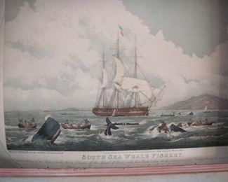 "Antique handcolored engraving ""The South Sea Whale"""