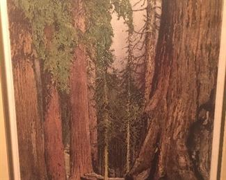 "signed etching by Liugi Kasimir of ""Mariposa Grove- Giant Redwoods""-  dated 1931"