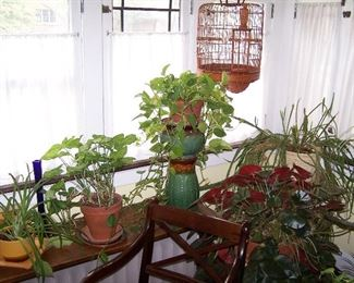 A FEW OF THE HOUSE PLANTS!