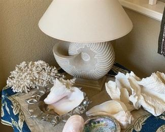 Shell lamp and the shell collection