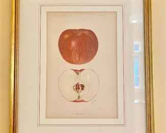 Framed fruit