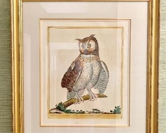 Hand colored engraving by Magdalena Bouchard from G. Bonelli's Hortus Romanus
