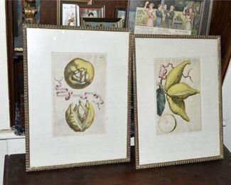 133. Pair of Antique Lemon Lithographs