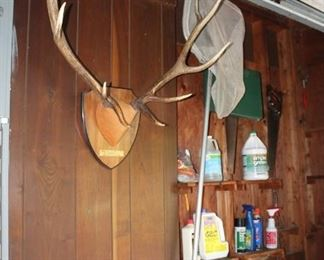 Antlers, mounted