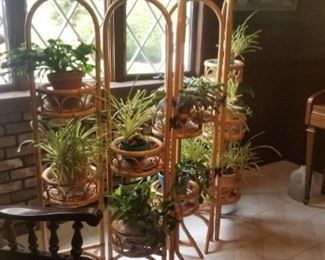 Plant stand with all plants for sale as well