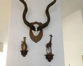 huge African giant kudu horns – $250