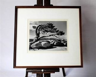 Black & White Framed Photo Print - Tree on a mountaintop - signed