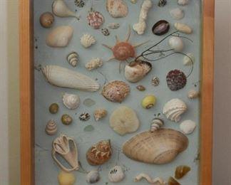 Shadowbox of Seashells