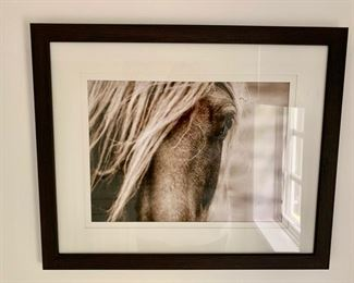 """97. Photo Close Up of Horse (22"""" x 18"""")"""