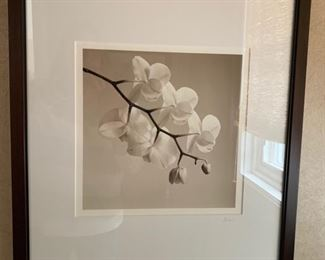 """120. Photo of Orchid by Asorjani (18"""" x 22"""")"""
