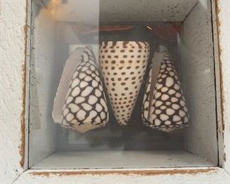 Framed Shell Collections