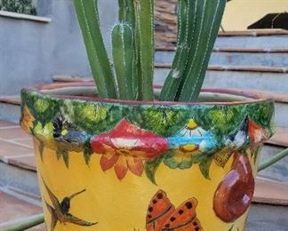 Beautiful colorful outdoor pots and plants
