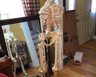 Full Size Teaching Skeleton