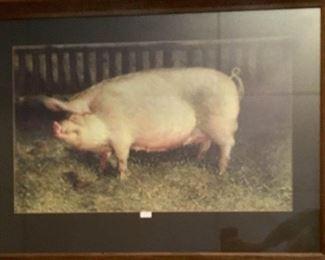 Print of Pig https://ctbids.com/#!/description/share/274885