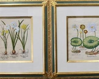 Basilius Besler, Botanicals