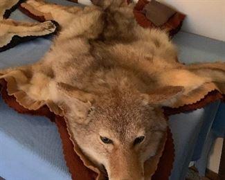 Coyote Rug
