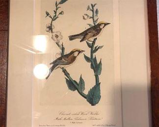 Audubon birds, original, framed.