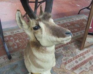 Mounted Antelope Head