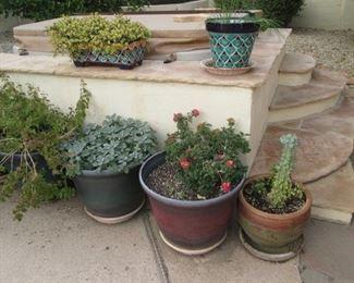 Florals, Cactus, Succulents