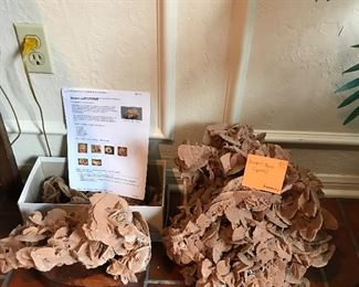 Large Desert Rose Crystals