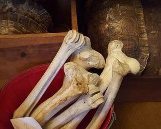 Elk bones and tortoise shells