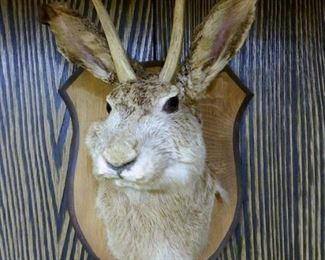 Jackalope taxidermy