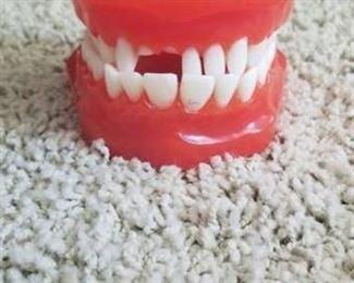 Teeth and Gums Model