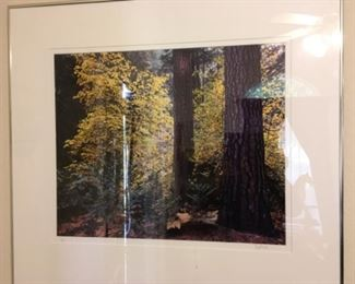 Signed and numbered Scot Miller photographs. Look him up he's an important contemporary artist.