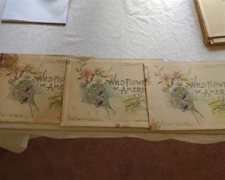 Wildflowers of America 18 issues of weekly publication
