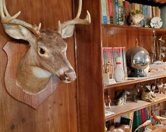 2 Deer
