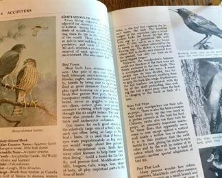 Audubon Nature Encyclopedia