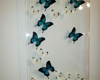More butterflies.