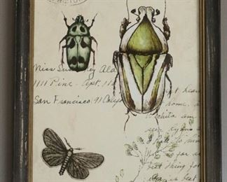 Lot 1 Bug Beetle Antique Style Framed Print $5 Starting Bid