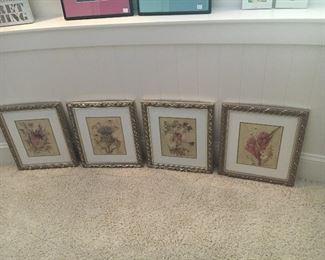 Four framed botanicals