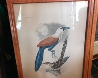 Titian Ramsey Peale  bird hand colored engravings c. 1858  set of  4