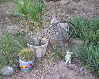cactus for sale barrell