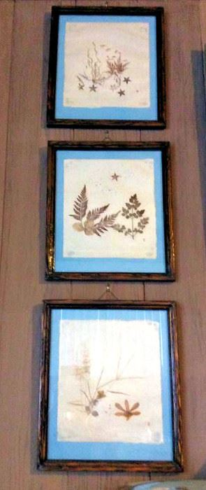 HMT097 Pressed Flower Art