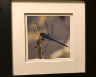 "dragonfly ""Lace"" by Margaret Lualdi"