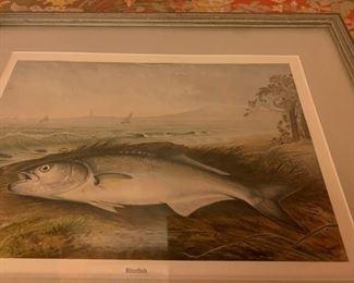 Bluefish, Lithograph