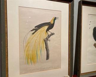 Jacques Barraband ornithological print