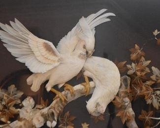 Large Shadowbox / 3-D Artwork with Birds (taxidermy / real feathers?)